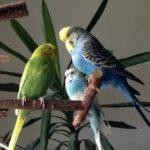 Zubehör: Anflughilfe für den Vogelkäfig