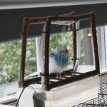 Vogeldusche für Wellensittiche selbst bauen