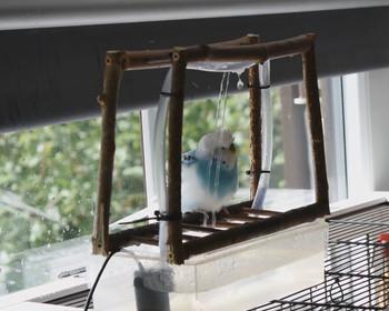 vogeldusche f r wellensittiche selbst bauen. Black Bedroom Furniture Sets. Home Design Ideas