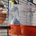 Vogelbad für Wellensittiche