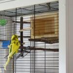 Süßes Vogelhäuschen, Schlafhaus aus Holz